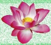 Лотос, Школа карьерного роста logo